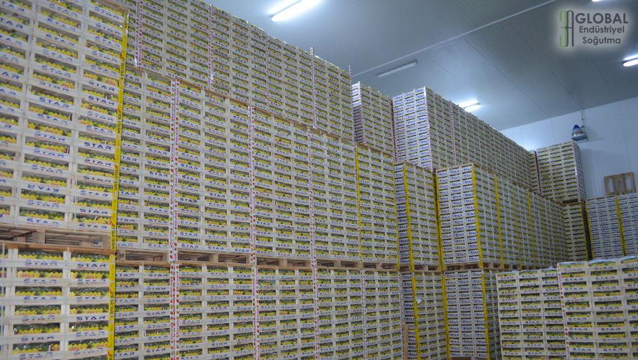 Endüstriyel üzüm soğutma deposu